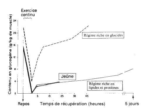 role du glycogene dans l exercice physique
